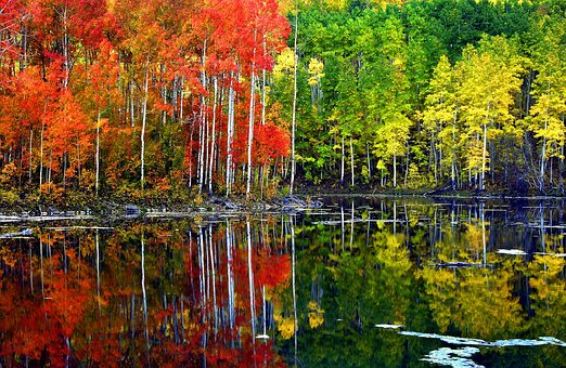All the colors of Aspen fall.