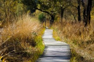 A wooden path in the forest area.